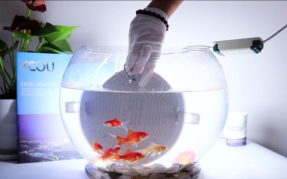 KEOU proveedor de luz sin marco led Pruebas a prueba de agua